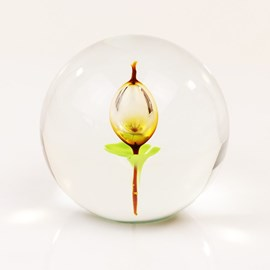 Glass sphere with tulip