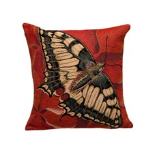 Cushion Swallowtail